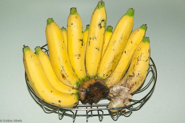 Bananen © Volker Abels - bluthochdrucksymptome.net